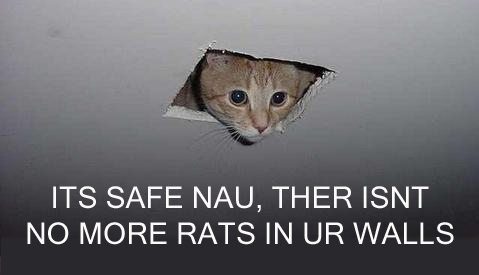 ITS SAFE NAU, THERE ISNT NO MORE RATS IN UR WALLS
