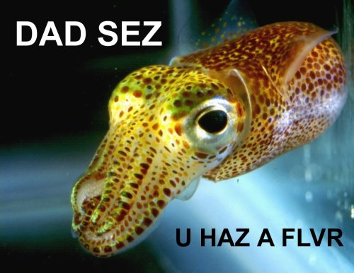 DAD SEZ U HAZ A FLVR